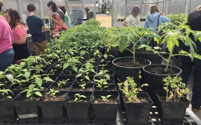 Happy Roots: A Tale of Grassroots Agriculture