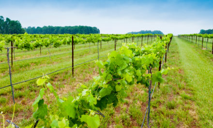 3 Must-See Wineries of Rowan County