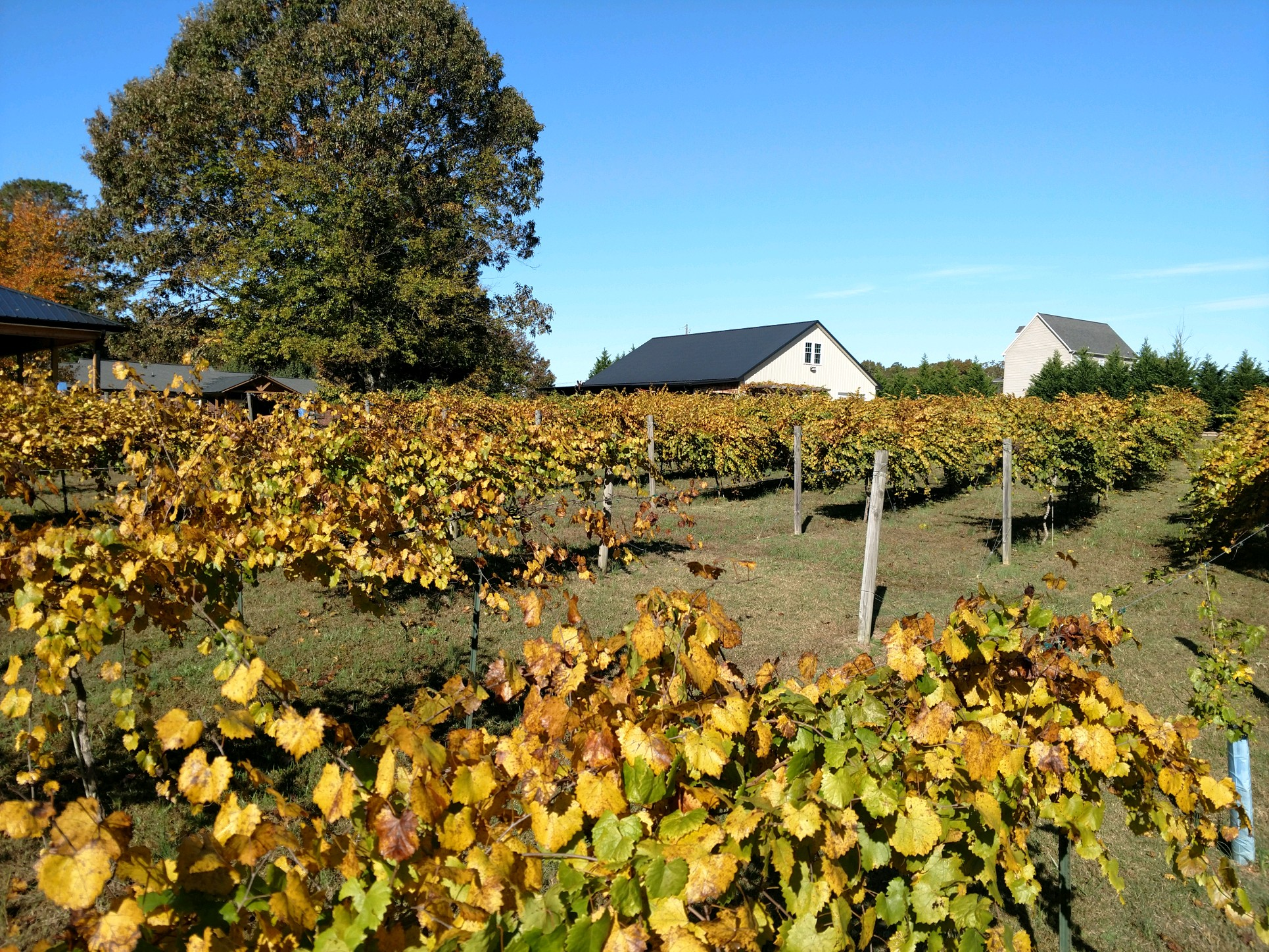 Douglas Vineyards - Kannapolis, NC