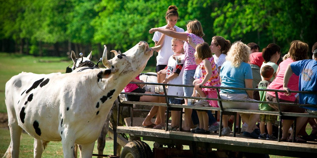 Family Friendly Activities in Rowan County
