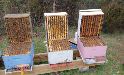showcasing bee hive boxes