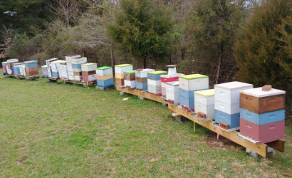 Boxes of bee hives