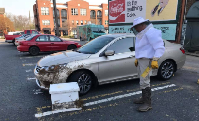 Bee Keeper rescuing a swarmed car