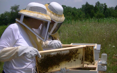 How Rowan County Locals are Changing the Plight of the Honeybee