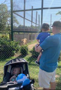 Family watching Bengal Tigers at tiger world