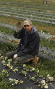 Longtime friend and employee, Pedro at Correll Farms
